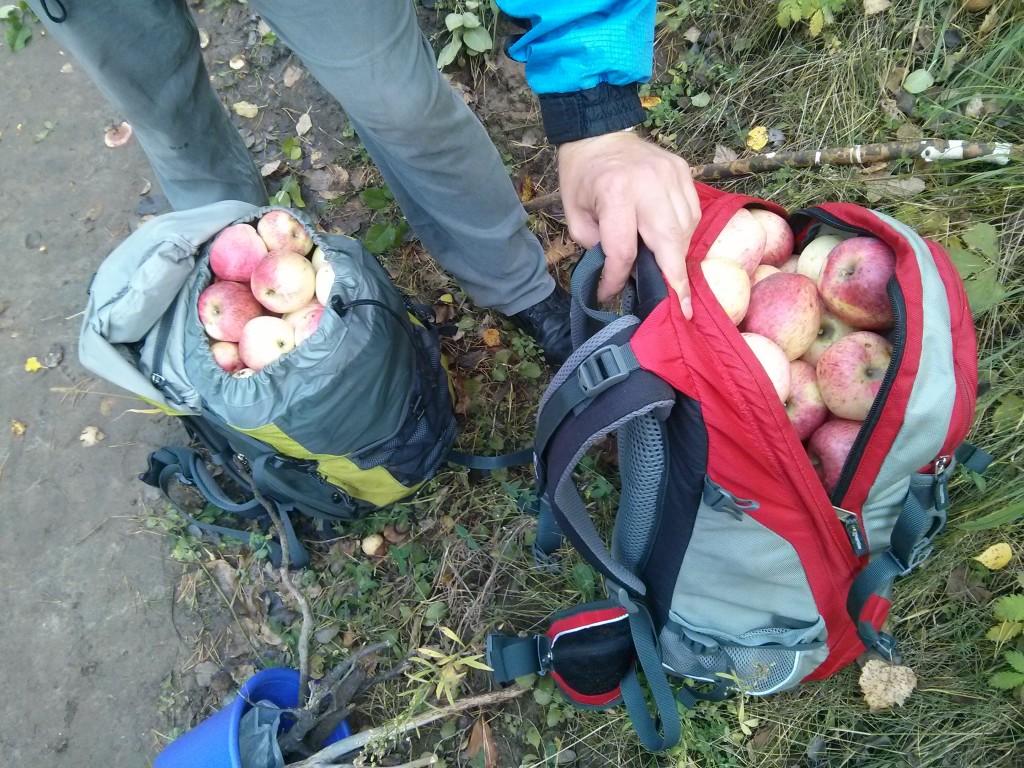 Яблоки - супер, решили собрать